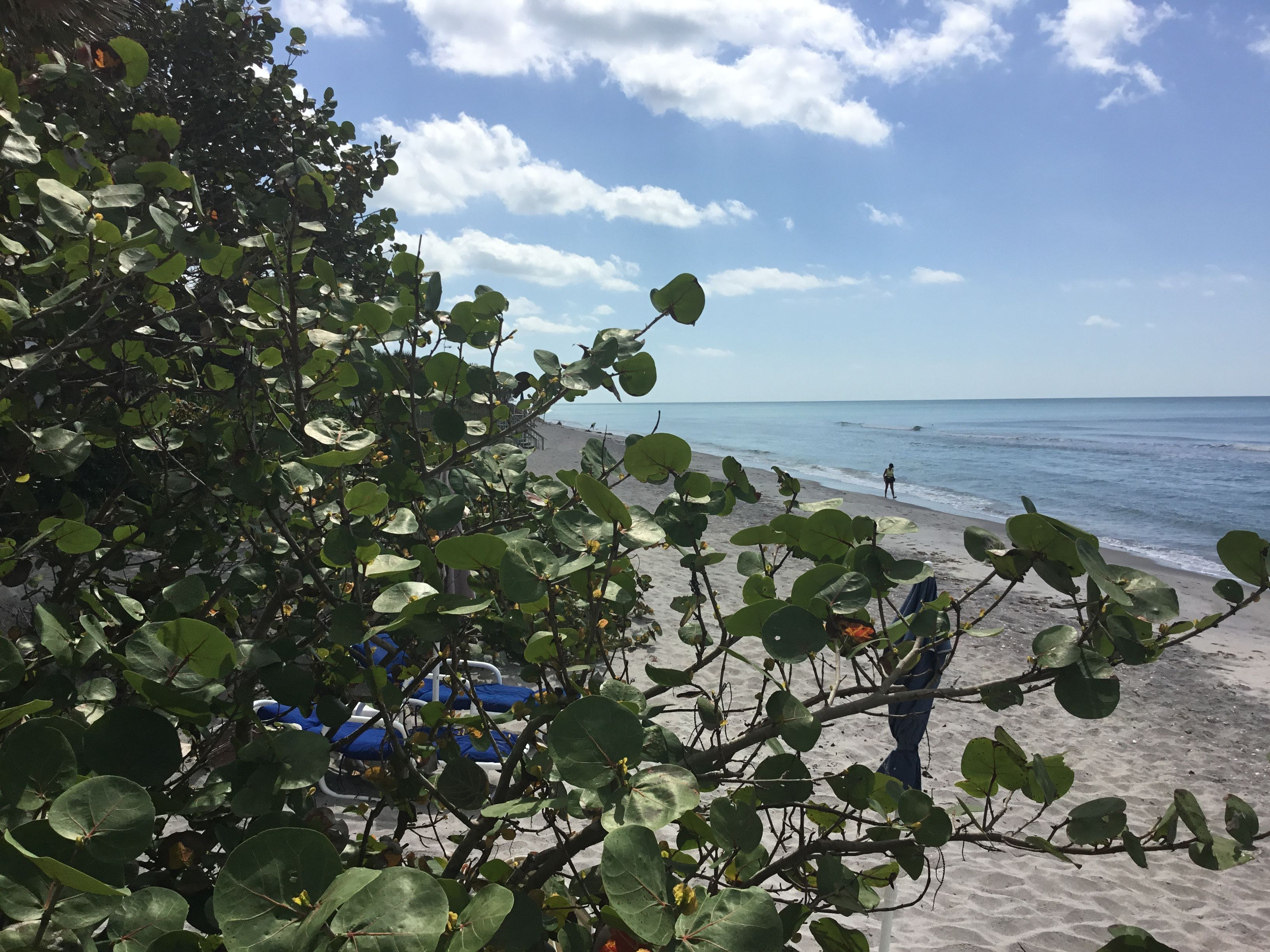 View to our south! | Florida hotels, Pearl beach ...