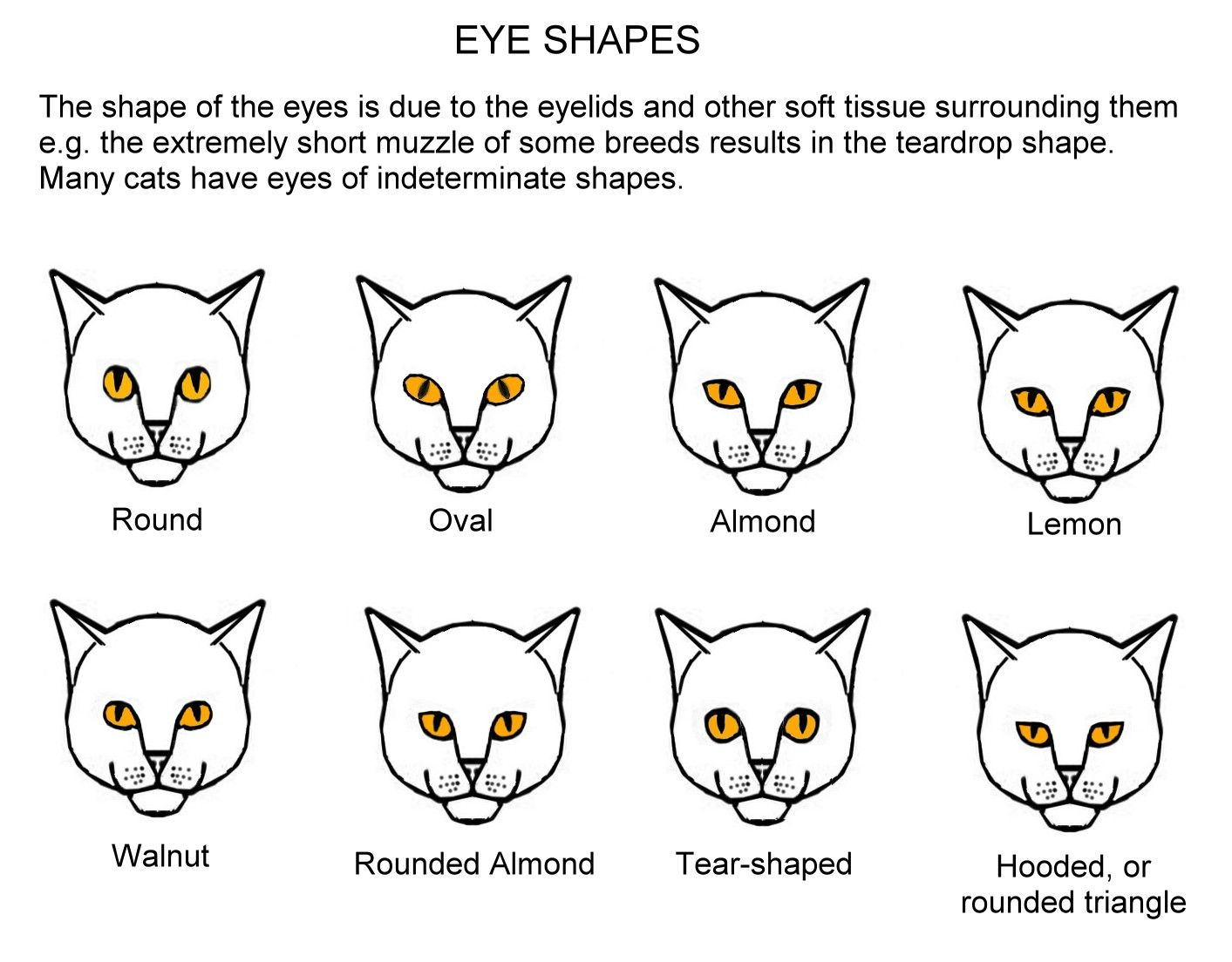Eye Colours Cats Pinterest Eye colors, Cat and Dog