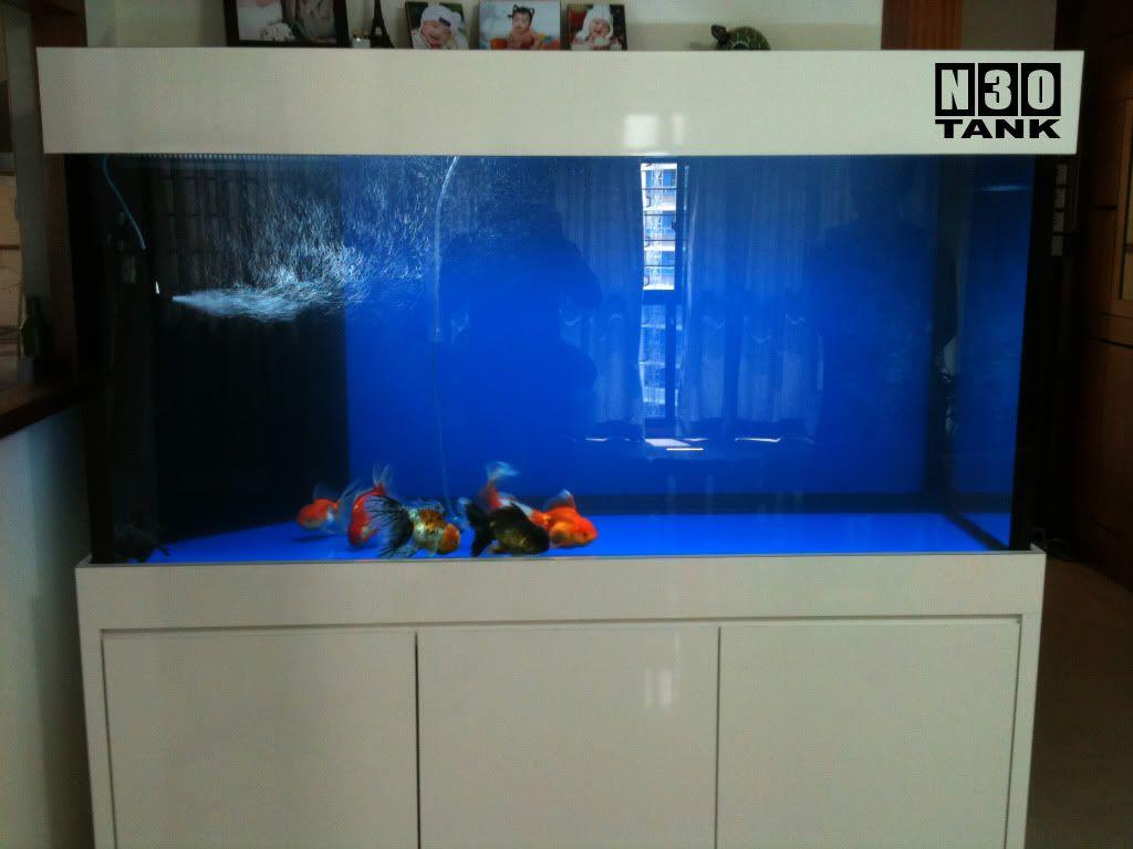 Aquarium fish tank singapore - Aquariums