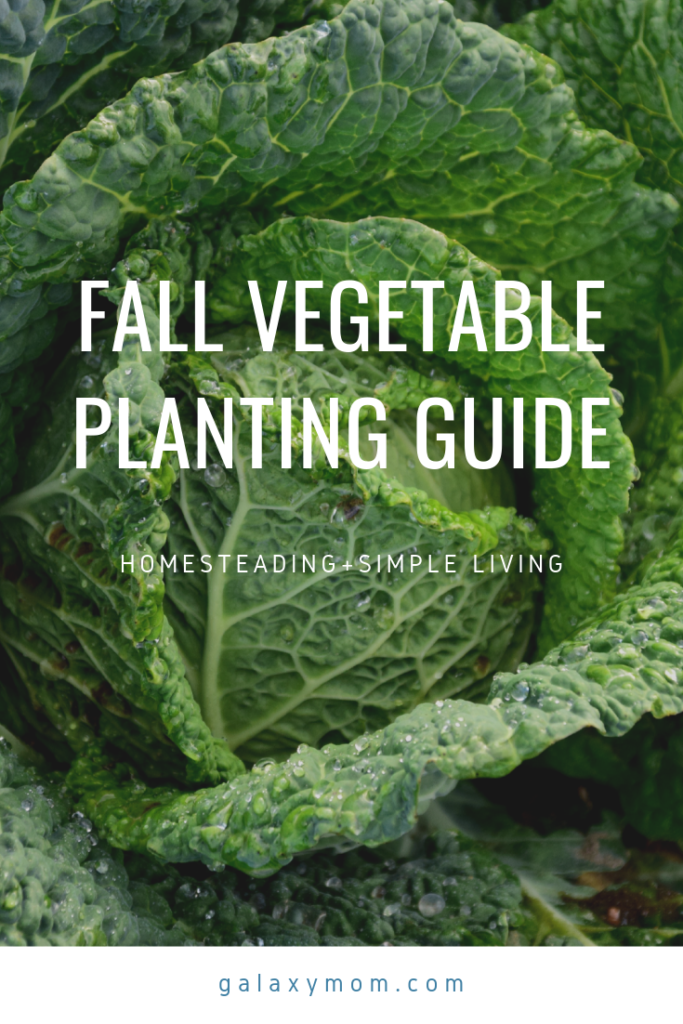 List of Vegetables to Plant in the Fall Fall garden