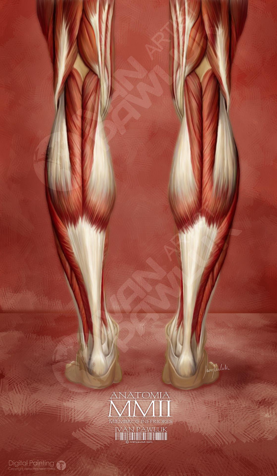 Excelente Inferiores órganos Anatomía Back Bosquejo - Anatomía de ...