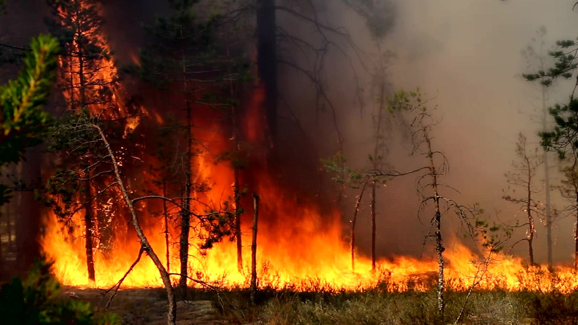 Real Forest Fire Stock Footage Forest Real Fire Footage Forest