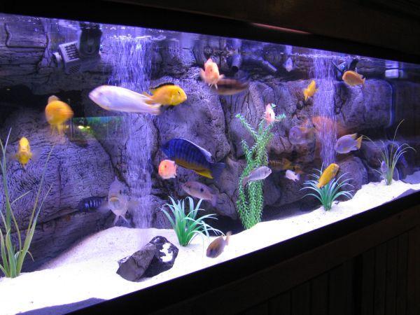 28 Modern Fish Tanks That Inspire Relaxation Cichlid Aquarium