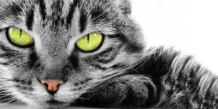 Risultati immagini per gatto in cappotto