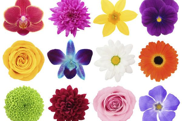 How Many Different Kinds Of Flowers Can You Name Games