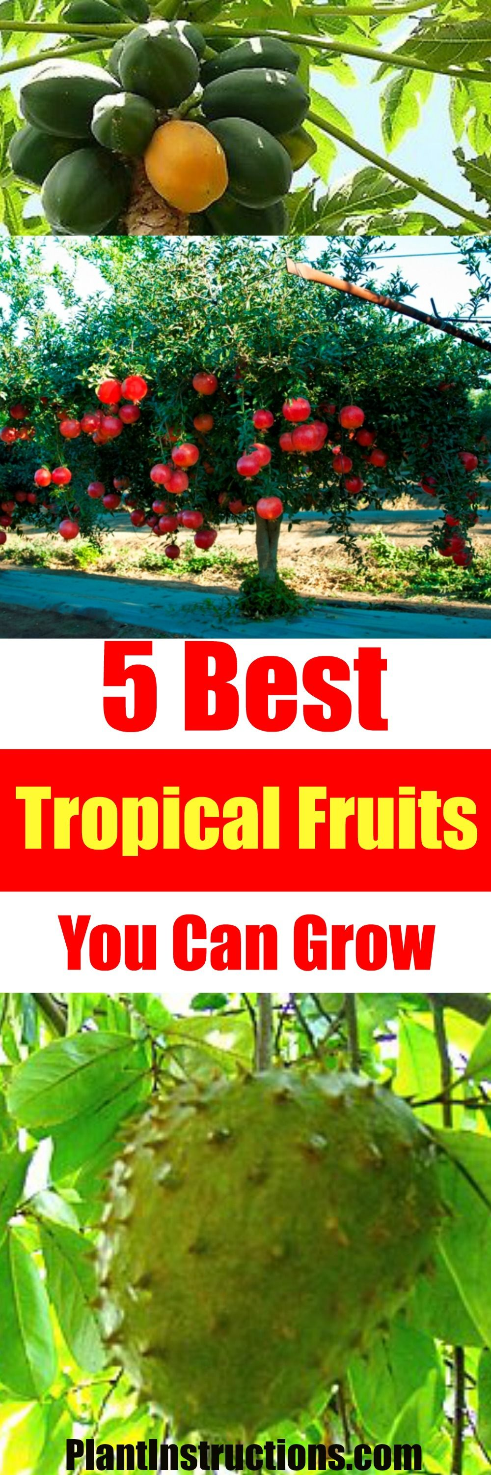 5 Best Tropical Fruits To Grow In Your Backyard Tropical Fruits Tropical Fruit Plants