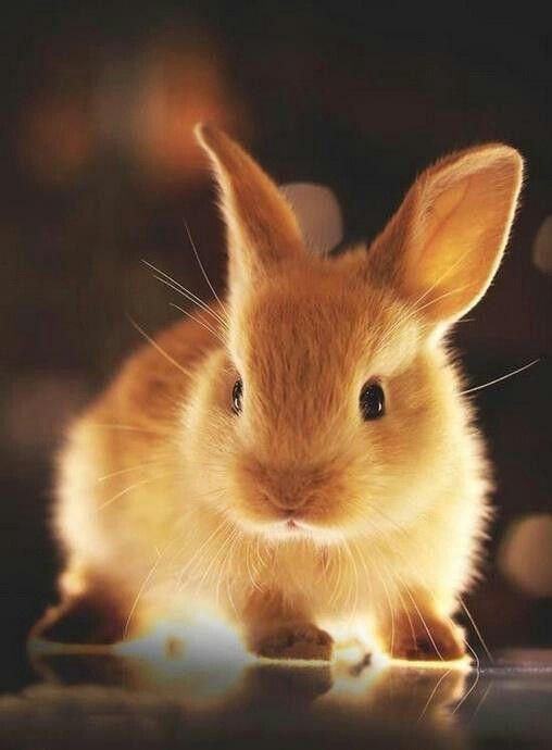 Omg It Is Like A Glowing Gold Bunnie Cute Animals Cute Baby