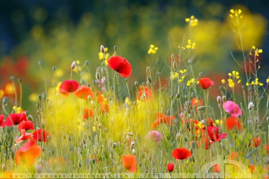 United Colours of Summer by ~thrumyeye on deviantART  bcc45c1a694