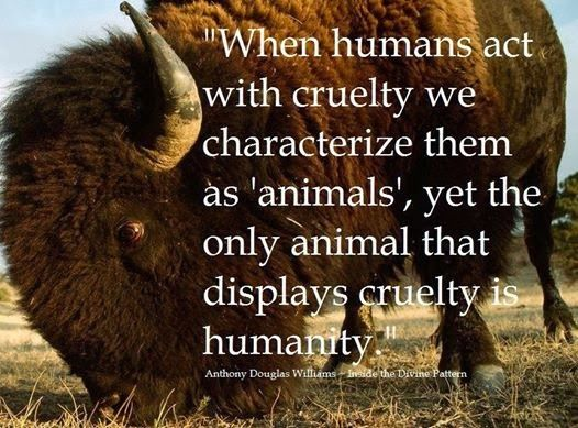 Animals Quotes When Humans Act With Cruelty We Characterize Them As Animals Yet