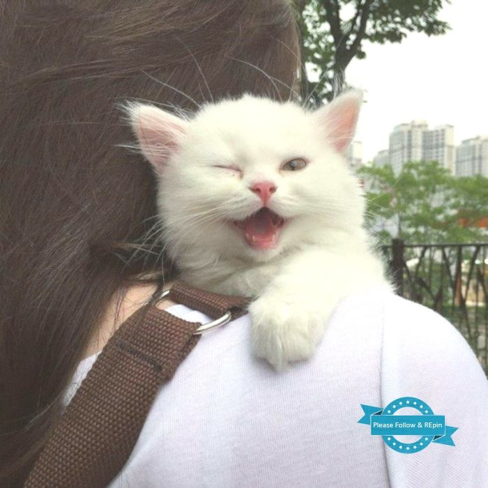 TOP 48 Funny Cats Pictures  Funny Animals Funny Cat  TOP 48 Funny Cats Pictures  Funny Animals Funny Cat