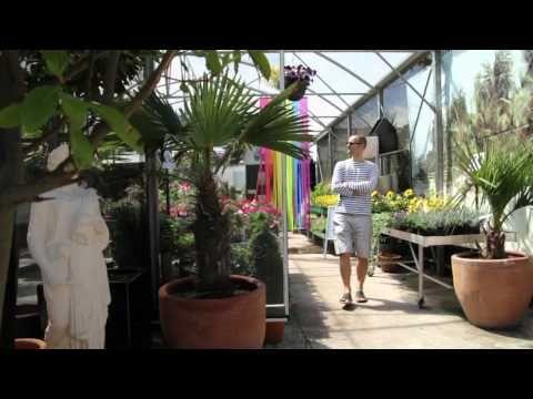 Urban Plant Life Dublin Plants Garden Dublin City