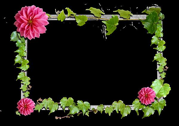 Flowers frame (9) | frames & borders | Flower frame, Frame ...