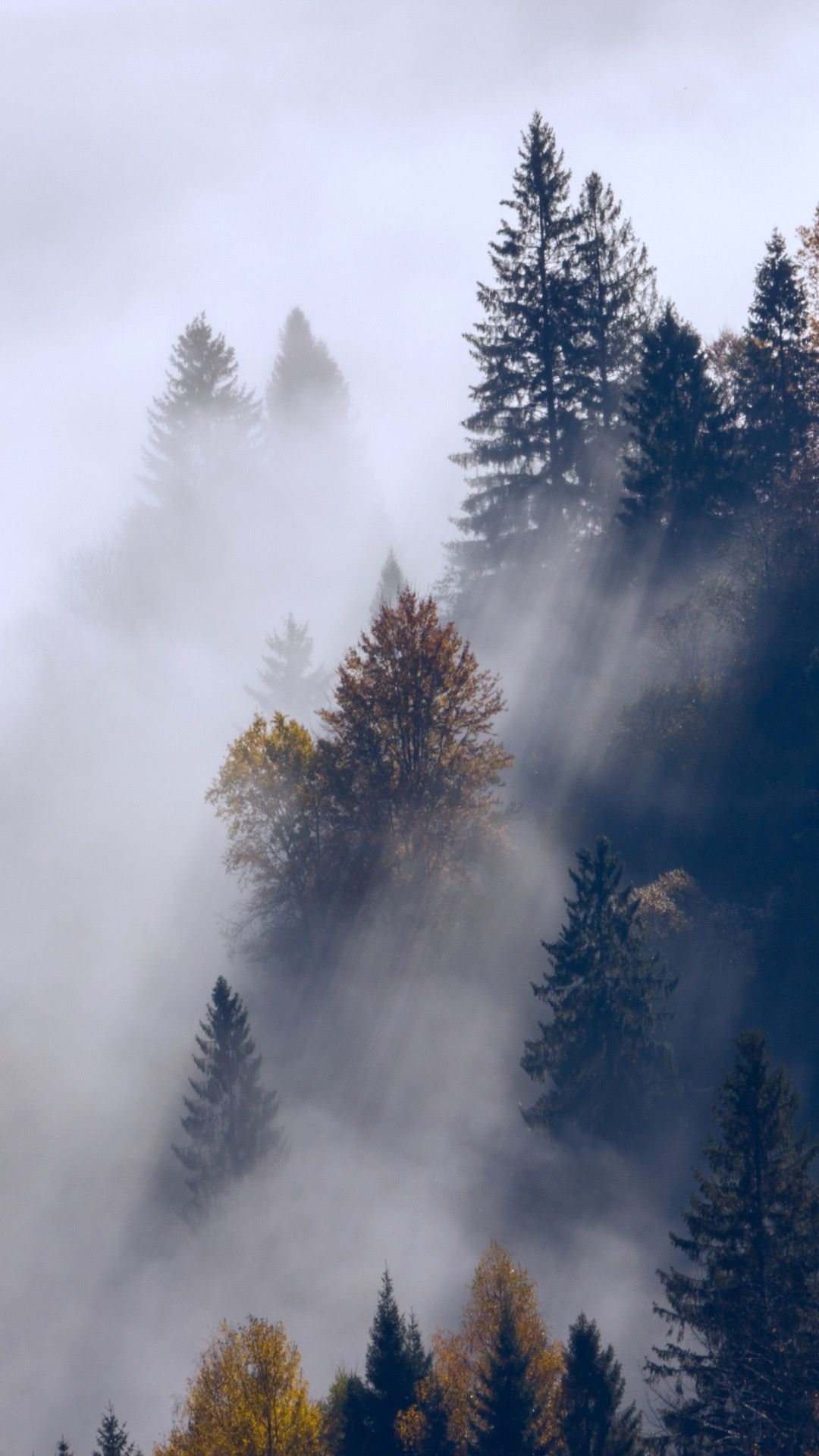 Aesthetic Foggy Forest Wallpaper : aesthetic, foggy, forest, wallpaper, Foggy, Forest, Wallpaper, Wallpaper,, Nature, Pictures,