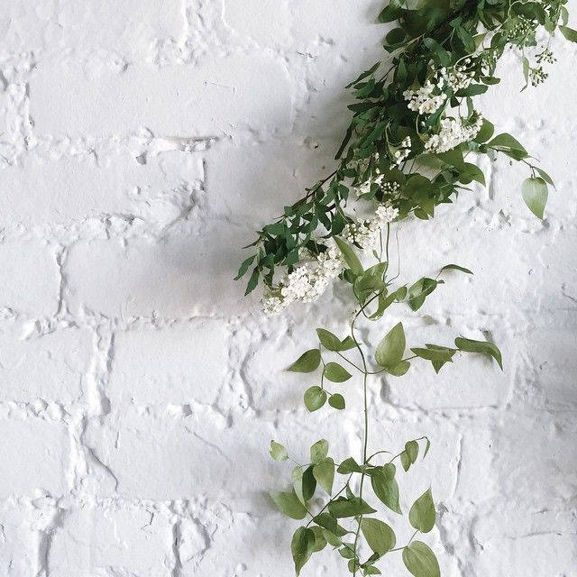 Just You Wait Plant Aesthetic Plants Pretty Flowers