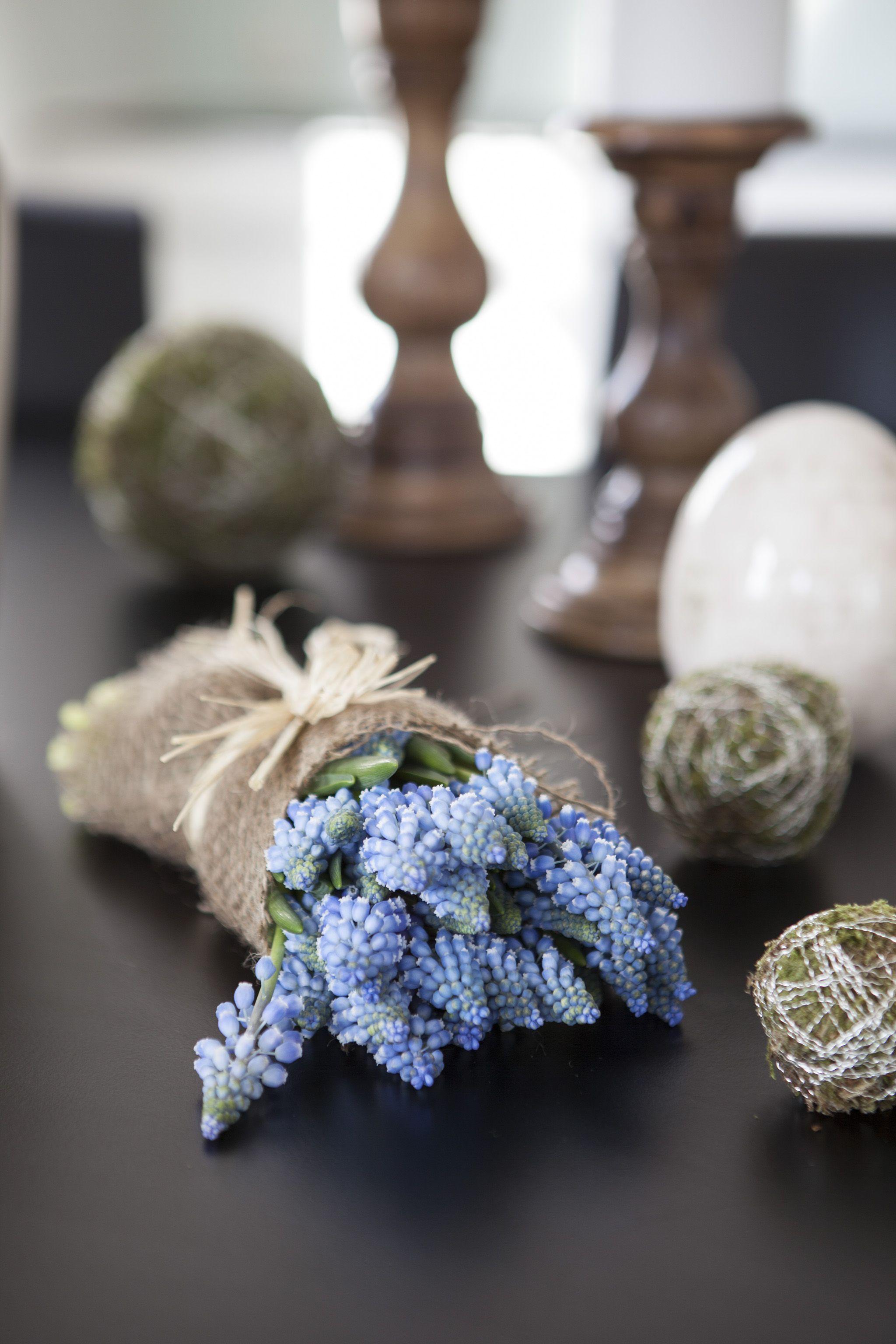 Muscari eller perleblomst, gir vårstmning i huset