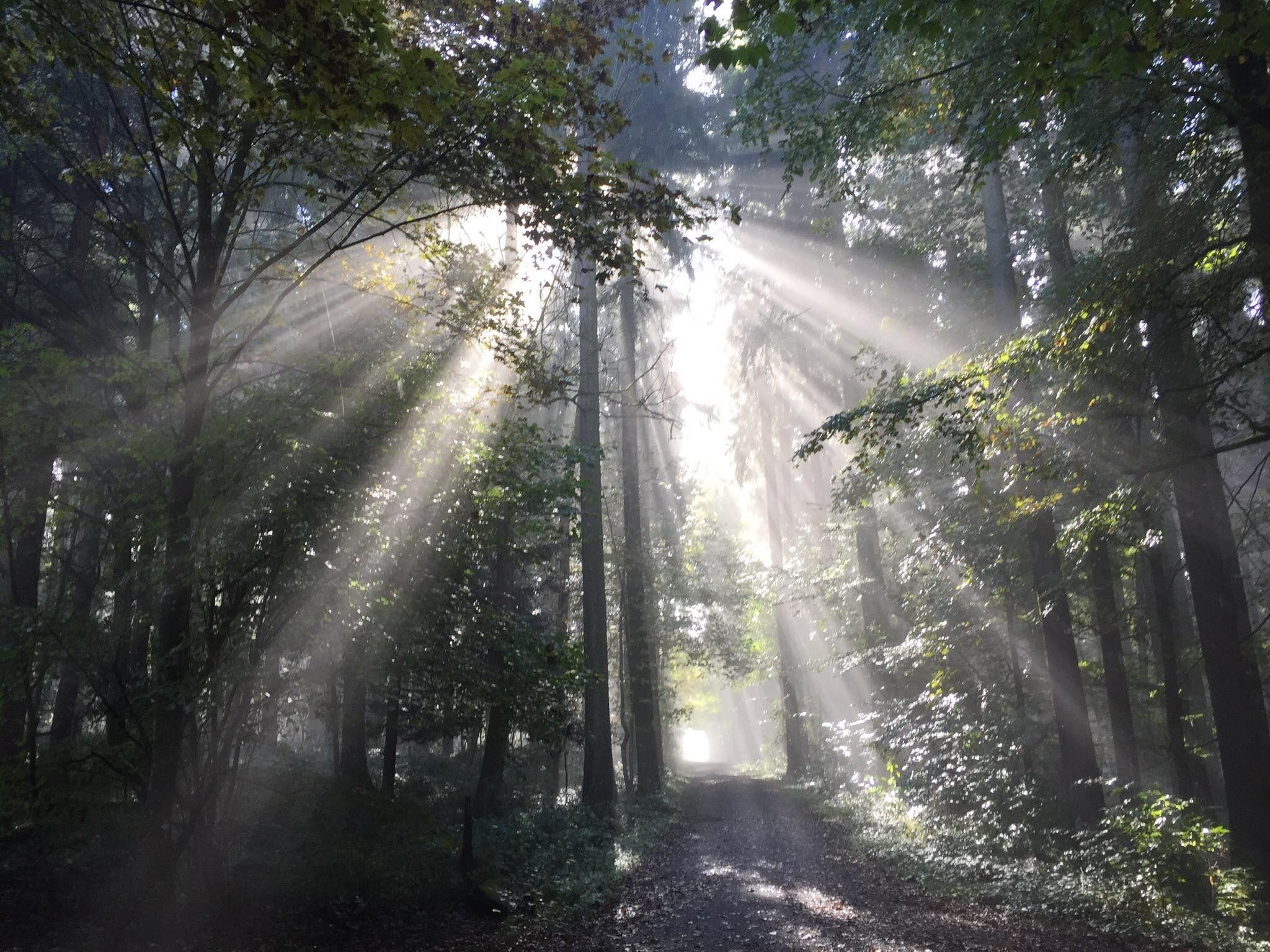 Forest in Switzerland [2048×1536] reddit Nature photos