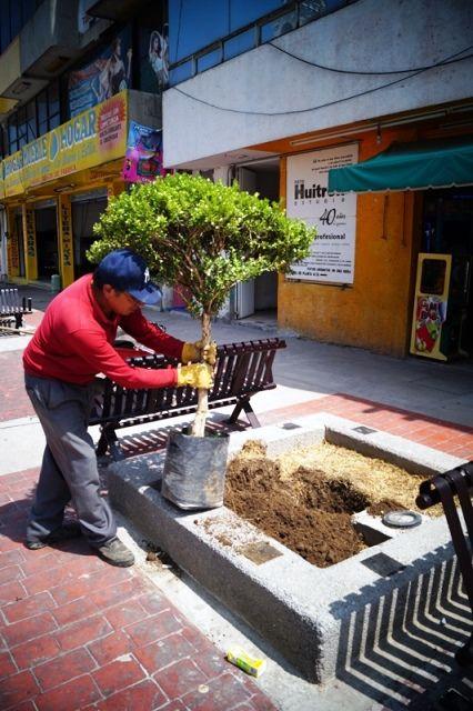 ecologa reforesta jardineras de calles centricas de santa ana