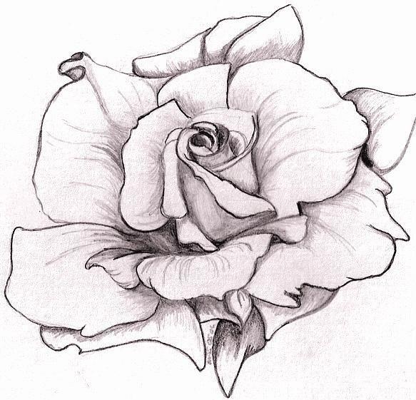 Rose Drawing Outline | ΛΟΥΛΟΥΔΙΑ | Pinterest | Flower outline ...