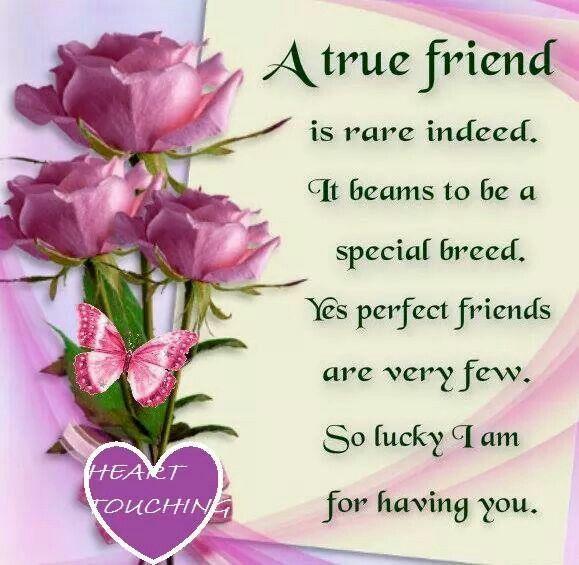 A Friendship Treasured