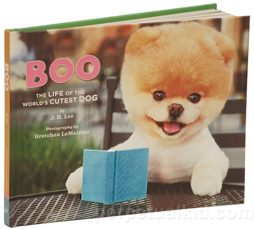 There S A Book Of Boo Gaaaaaaaaaaaaaaaahhh So Cute That Was A Gaaaah Of Cuteness Not Of Anger Please If World Cutest Dog Boo The Dog Boo The Cutest Dog