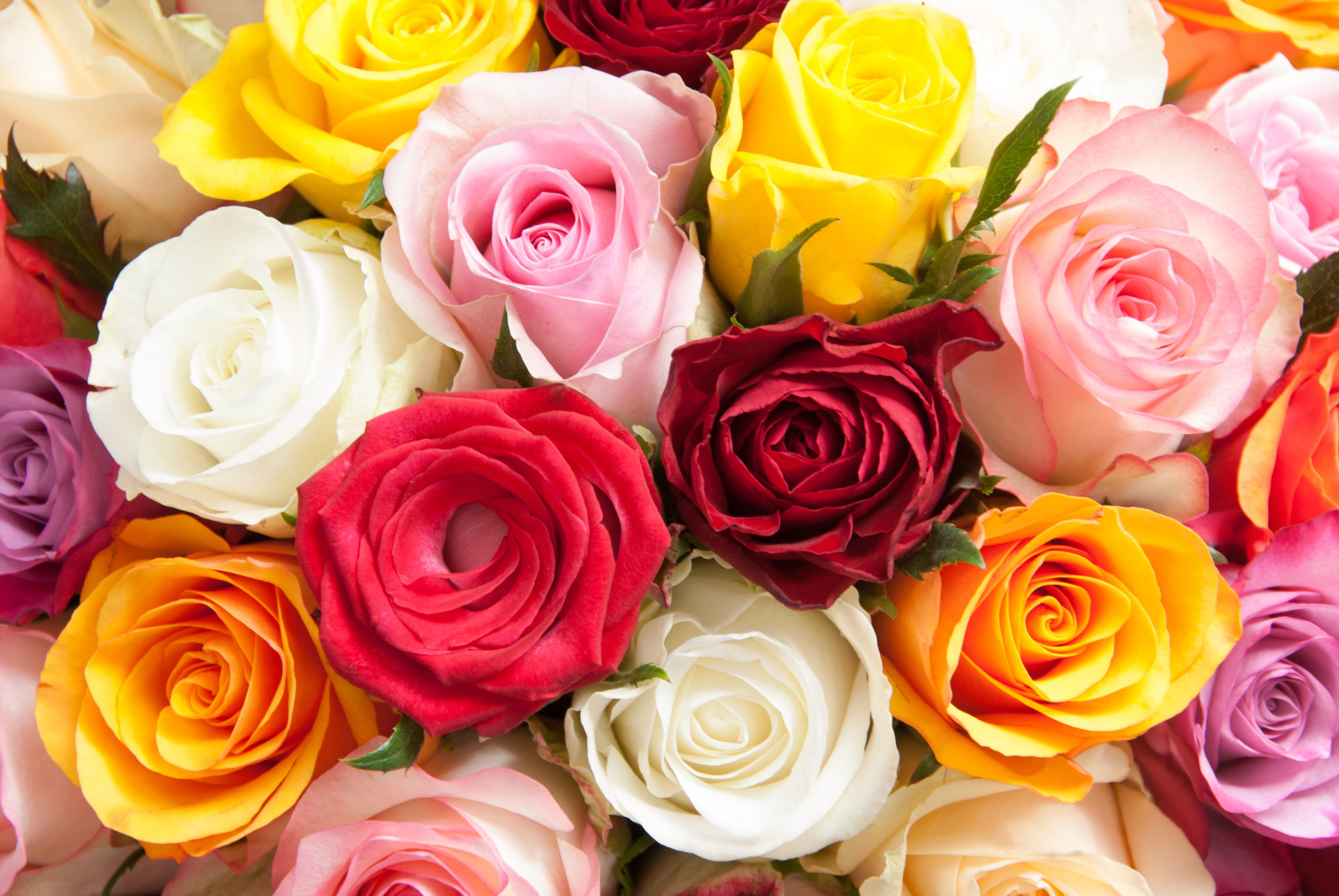 You can never go wrong with a bunch of coloured roses. #rosesbouquet  #flowers #flowersstyle #flowerstalking #beautif…   Flowers delivered,  Flower delivery, Flowers