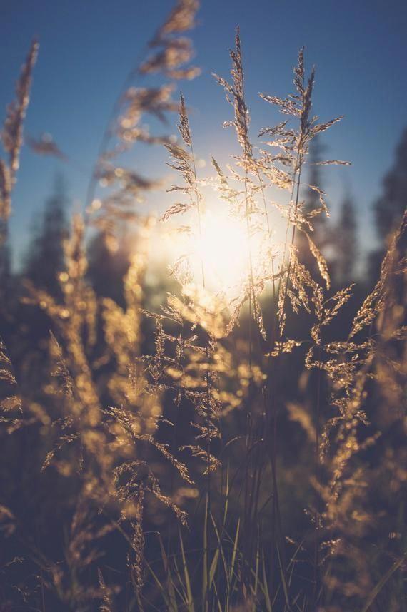 Sunlight, Golden Hour, Field, Grass, Nature, Alaska Photography, Nature Photography, Wall Art, Fine Art Print, 8x10 Print