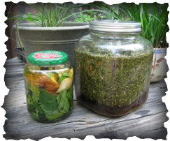 Some of our favorite recipes for natural and organic herbal gardening and pest control.