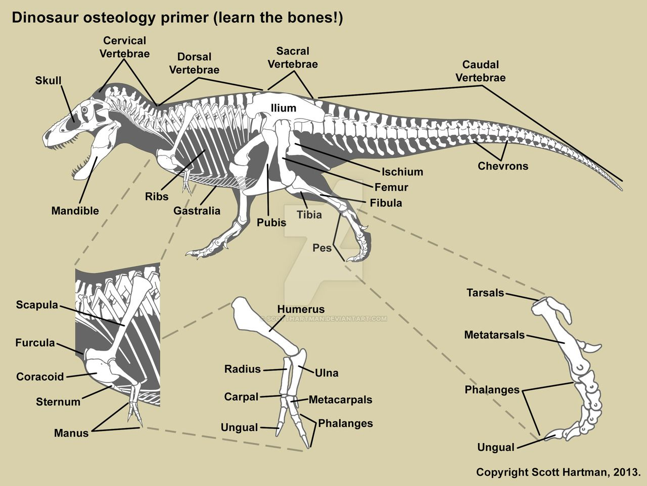 t-rex anatomical - Google Search | Dinosaurs | Pinterest | Prehistoric
