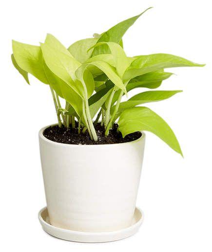 7 Office Plants You Won't K*Ll Best Office Plants 400 x 300