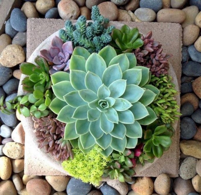 Indoor And Outdoor Succulent Gardens That Incredibly Easy ...