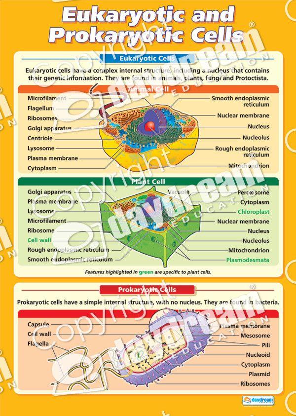 Eukaryotic and Prokaryotic Cells Poster Cell model
