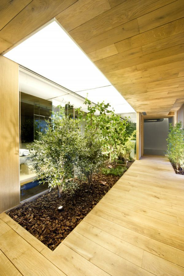 Jardines interiores modernos con palmeras, arbustos, rosas y piedra ...