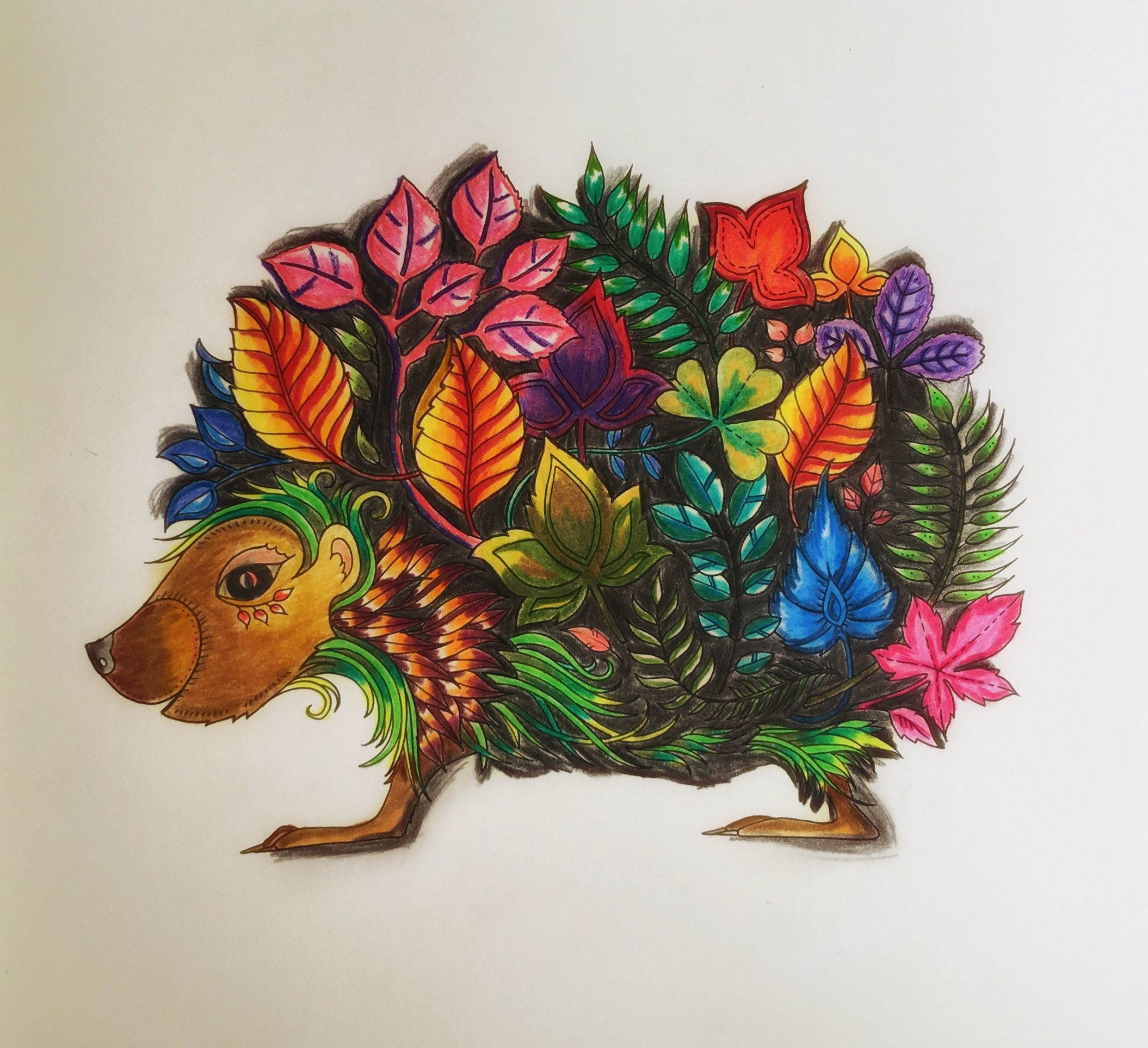 Enchanted Forest Johanna Basford The Hedgehog
