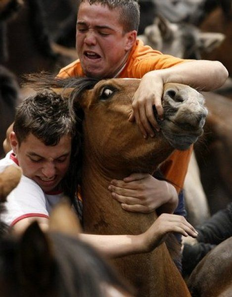 festival GULAT antara kuda dengan MANUSIA