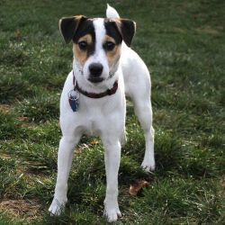 Adopt Dash On Cutest Dog Ever Cute Dog Pictures American Foxhound