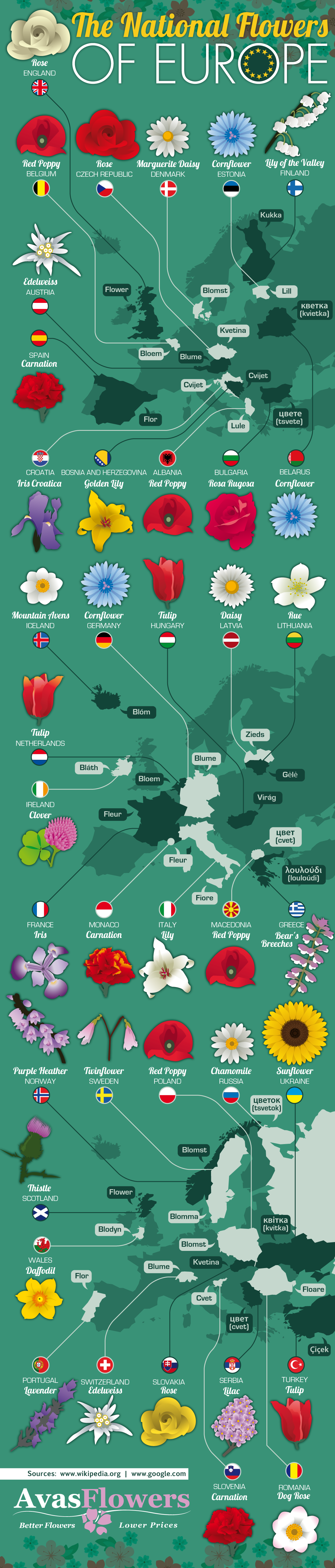 Flowers That Represent European Nations Infographic Avas Flowers Flowers Infographic