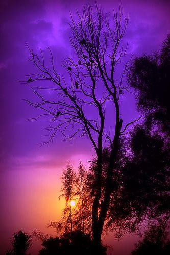 Sunset At Areen Beautiful Nature Beautiful Sky Beautiful Landscapes