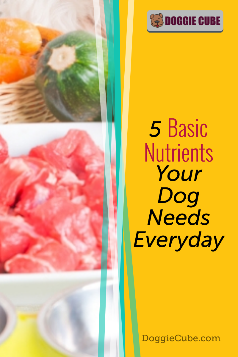 Your dog needs the essential nutrients to grow, go, and