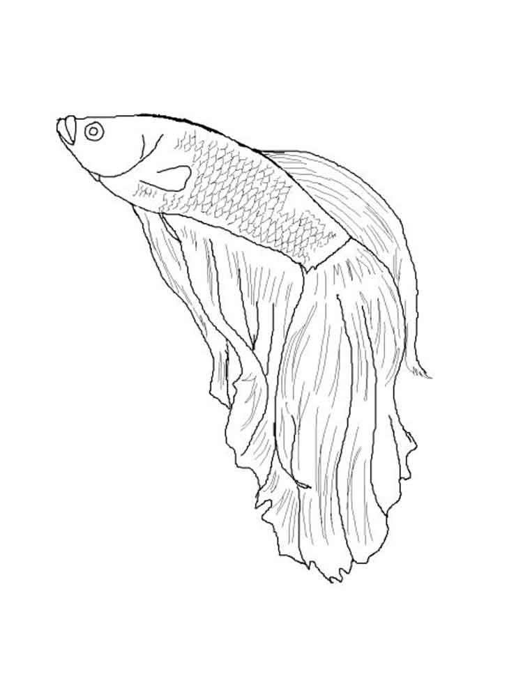 Printable Coloring Pages Of Betta Fish