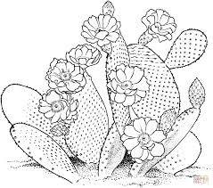 Resultado De Imagen De Dibujos Para Colorear El Desierto Paginas Para Colorear De Flores Dibujos Dibujos Para Colorear Adultos