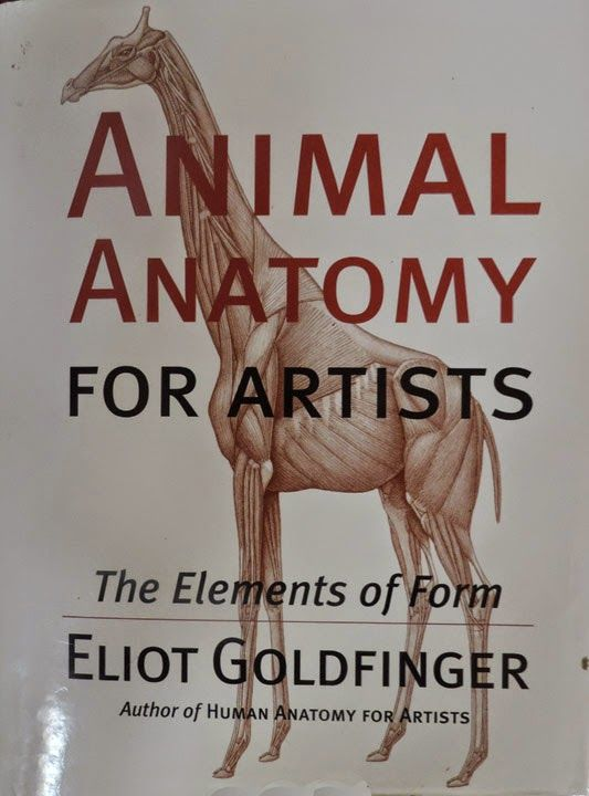 Sandy Scott Art: animal anatomy | 2-D | Pinterest