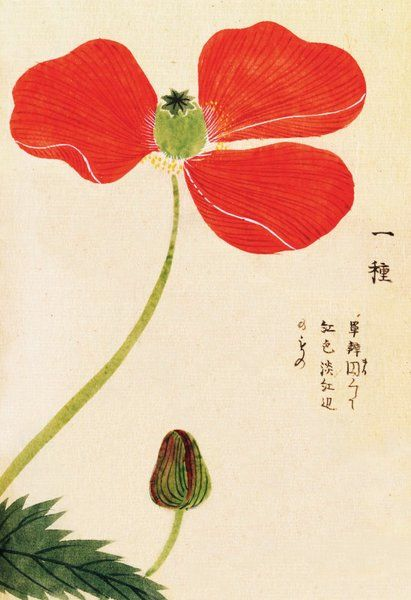 Image result for Japanese painting of poppy flower opening