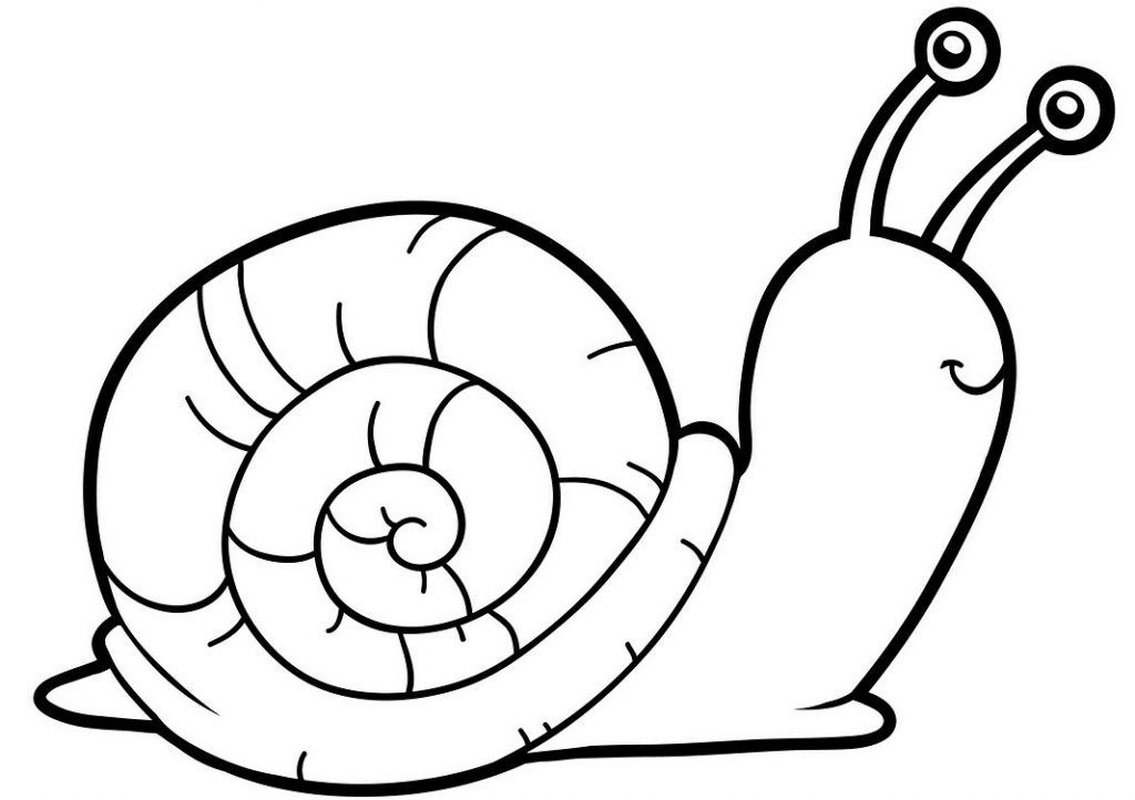 Coloring Book Flowers Outline Snail Coloring Page Snail Picture To Color For Kid Garden Activities Coloring Pages Coloring Books Colouring Pages