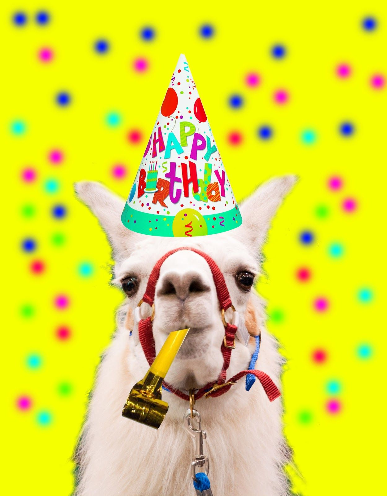 Happy Birthday Llama Belated 11th Greetings Fun