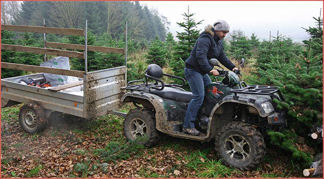 Fischer Agrar: Christbaumzucht mit Quads Im niederösterreichischen Großrust betreibt das Team von Fischer Agrar eine Christbaumzucht mit Quads und Schafen – ATV&QUAD hat sich das einmal angesehen http://www.atv-quad-magazin.com/aktuell/fischer-agrar-christbaumzucht-mit-quads/
