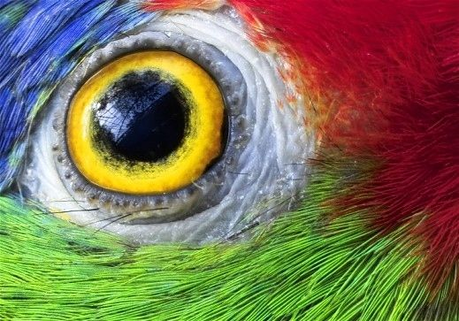 15 Parrot Eyes Really Close Up Animal Close Up Eye Close Up Parrot