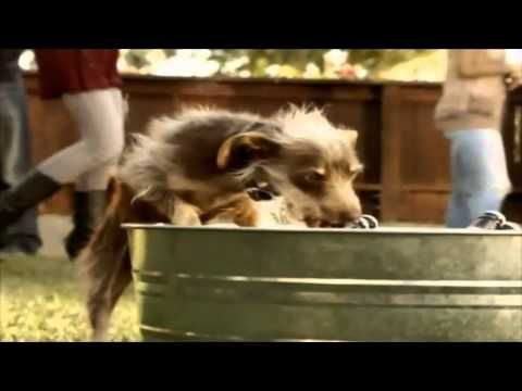 Bud light beer chasing dog commercial bud light pinterest bud light beer chasing dog commercial aloadofball Images