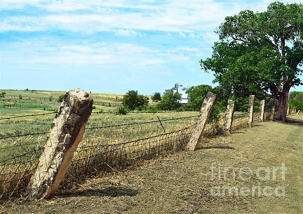Kansas Post Rock Fence.  Pioneers used limestone rocks as posts when there were few trees.