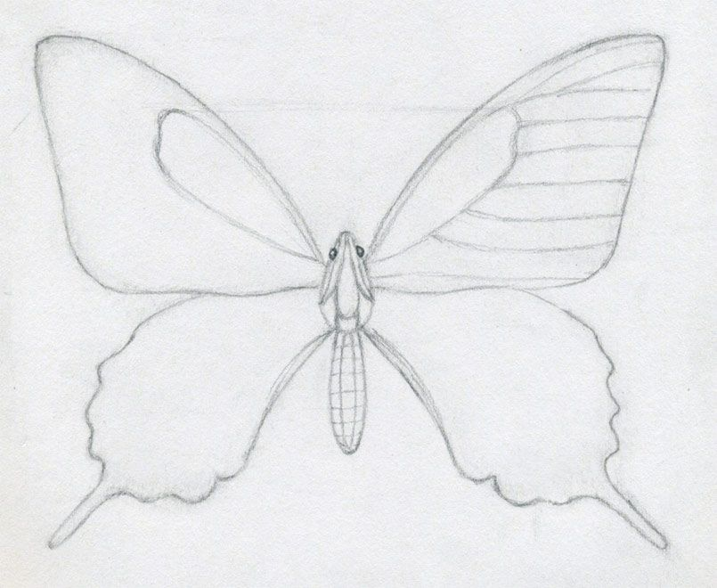 Butterfly Line Drawing Easy : How to draw a butterfly step by easy plus the body of