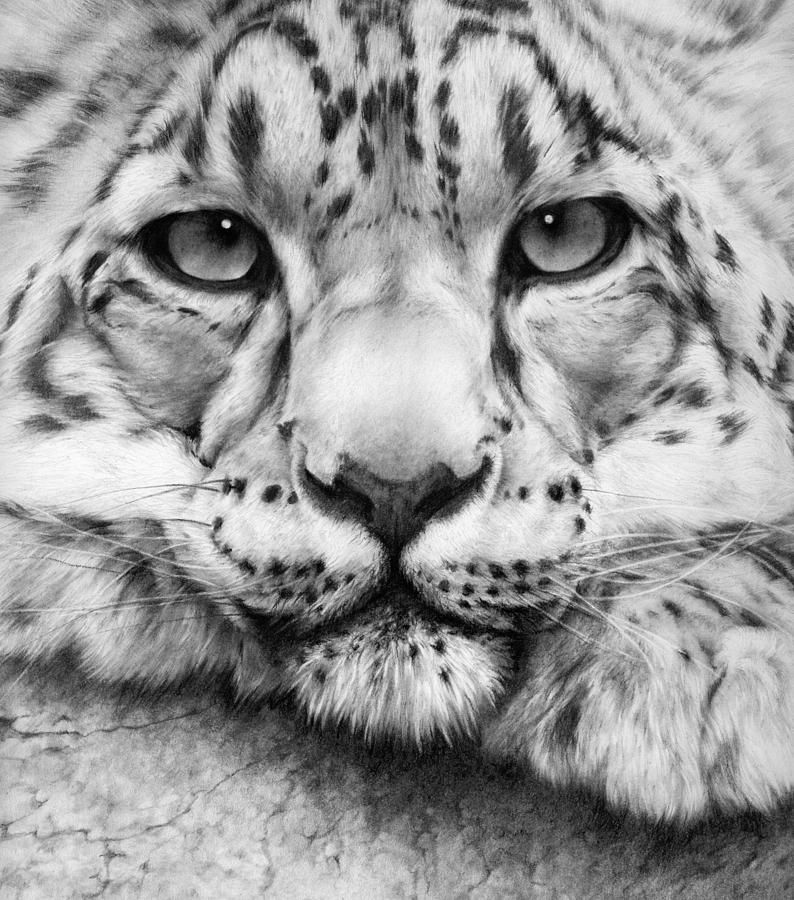 Large Cat Drawings Google Search Charcoal Art Animals Wild